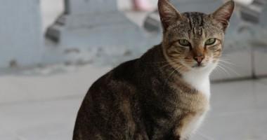 Come eliminare efficacemente peli di gatto in casa