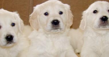 Come eliminare efficacemente peli di cane in casa